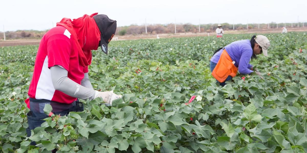 Monsanto asegura que semillas modificadas no causan daños