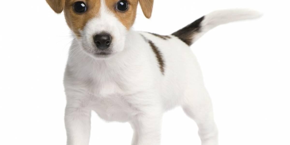 Cinco pasos para estimular el desarrollo cognitivo en un cachorro
