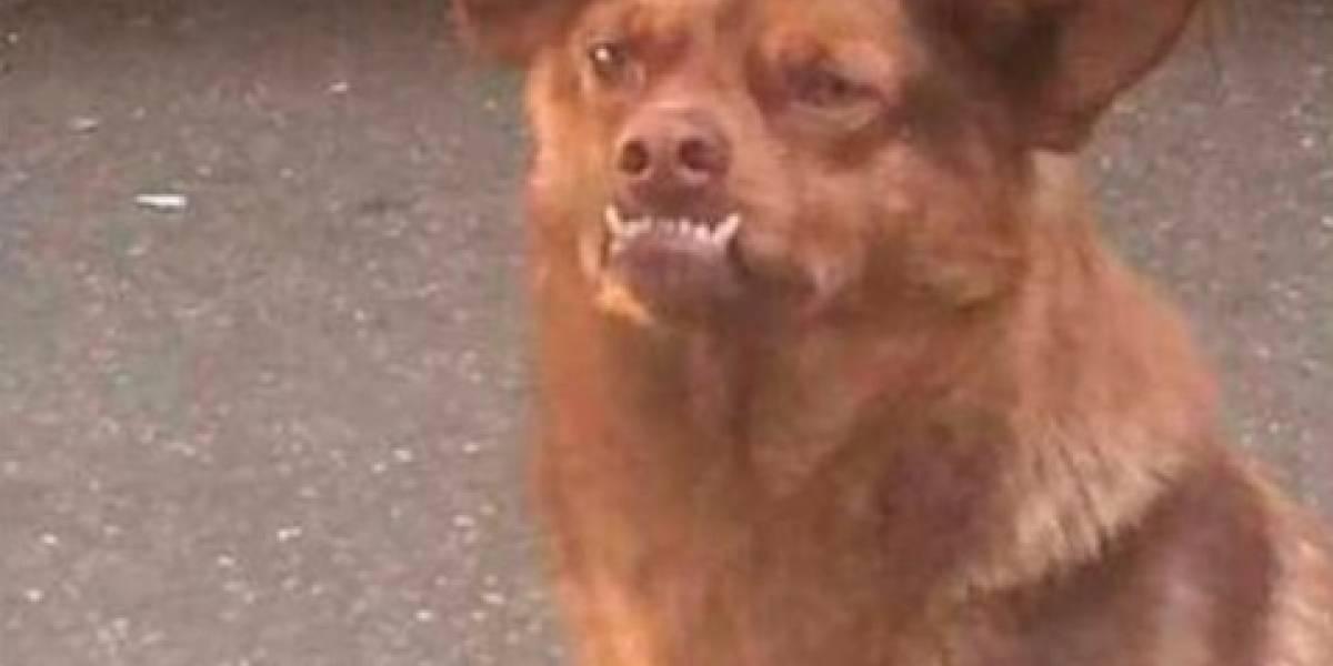 Memes de Chilaquil, el perro más famoso de las redes
