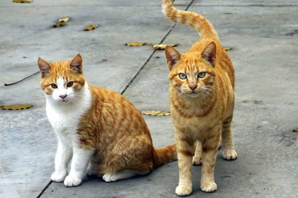 enfermedades causadas por gatos a mujeres embarazadas
