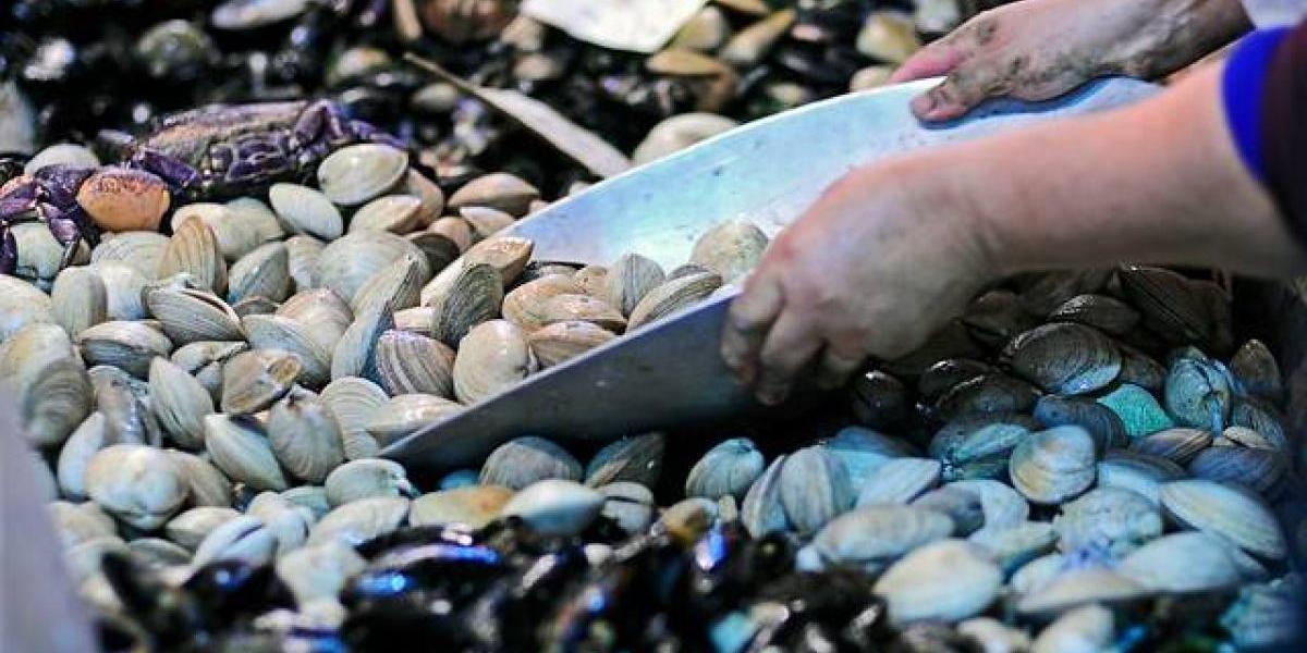 """""""Del mar a mi mesa"""": la campaña que busca que los chilenos coman más pescados y mariscos"""