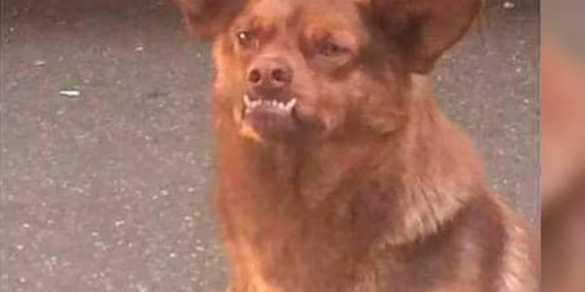 Chilaquil, el verdadero origen del perro más famoso de México