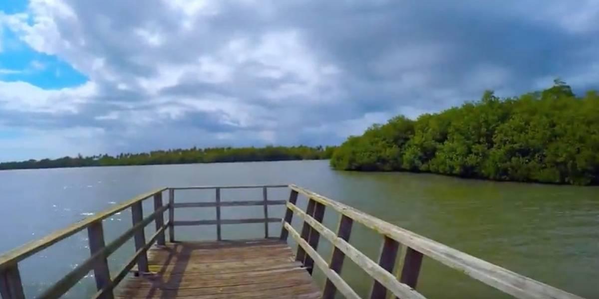 Encuentran manatí muerto en Cabo Rojo