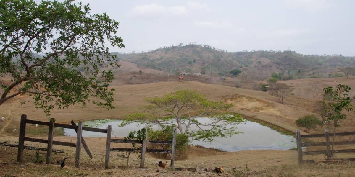 Falsas víctimas reclamaban 2000 hectáreas en Cesar