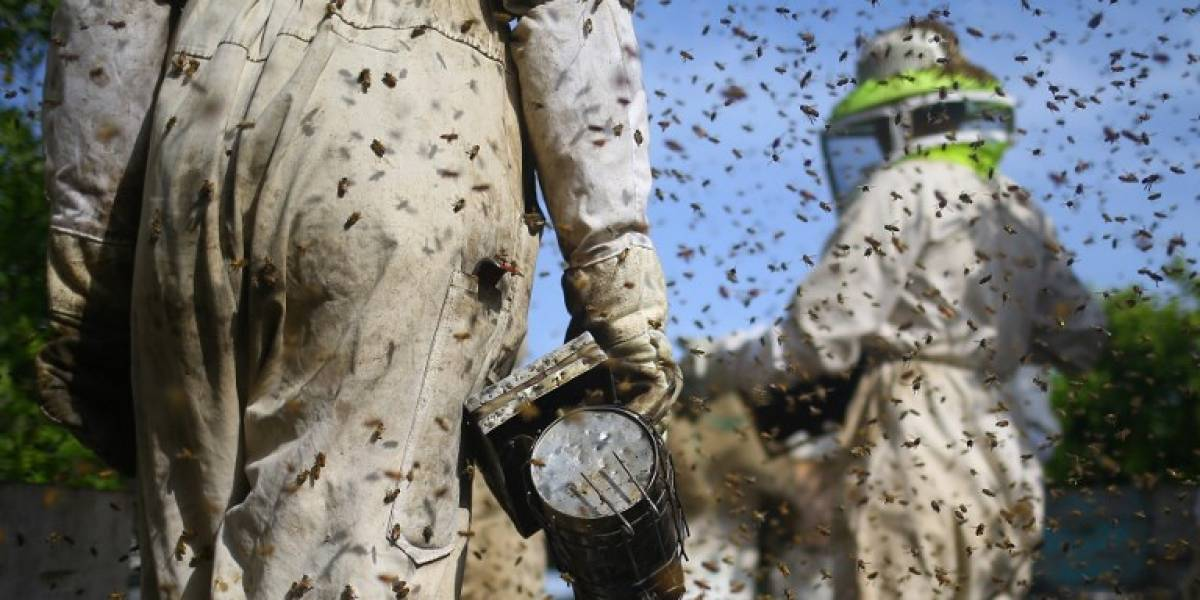 Dos apicultores retiran 40 mil abejas con solamente 3 picaduras