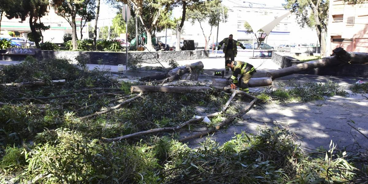 CDMX, desprotegida ante contingencias por falta de árboles