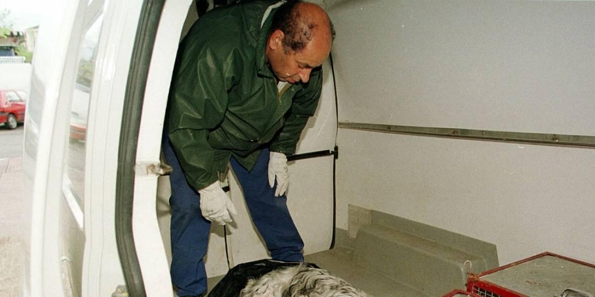 Hombre habría violado a un cachorro en Villavicencio