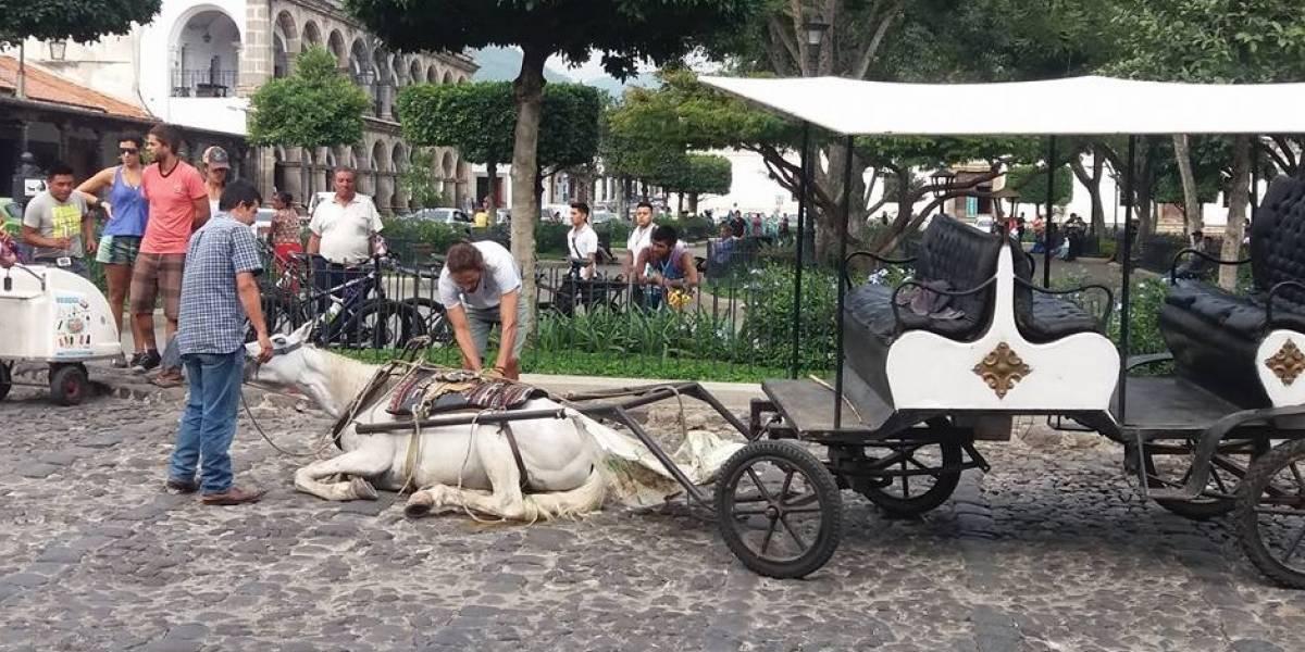 """Denuncian maltrato animal en La Antigua """"El pobre caballo no aguantó"""""""