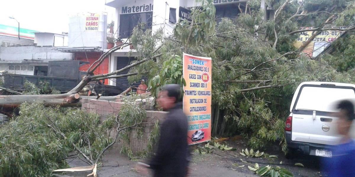 Lluvias ocasionan caída de 18 árboles e inundaciones en CDMX