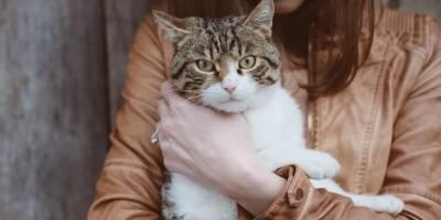 Se necesita cubrir la plaza de 'abrazador' de gatos