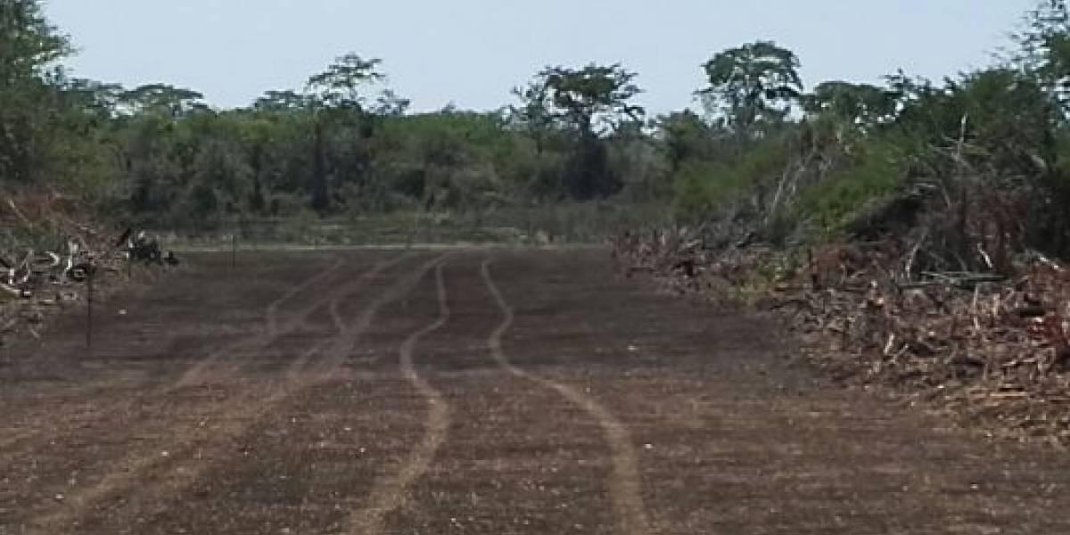 Autoridades destruyen segunda pista clandestina localizada en Petén