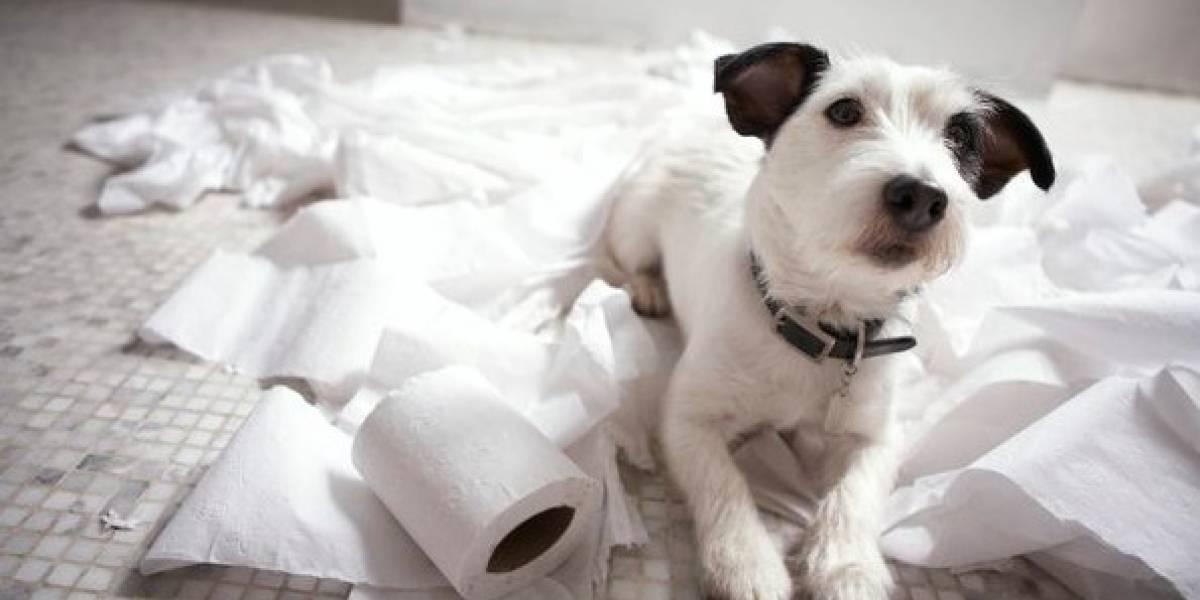 Heces sólidas y sin olor son señal de una buena alimentación en las mascotas