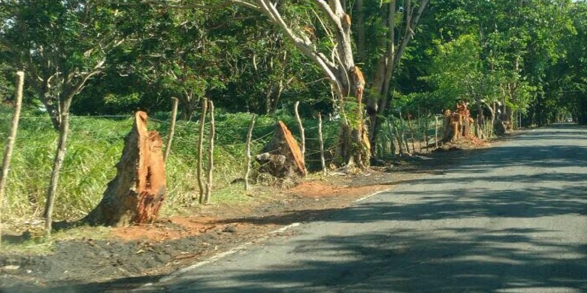 Denuncian masivo corte de árboles entre Loíza y Río Grande