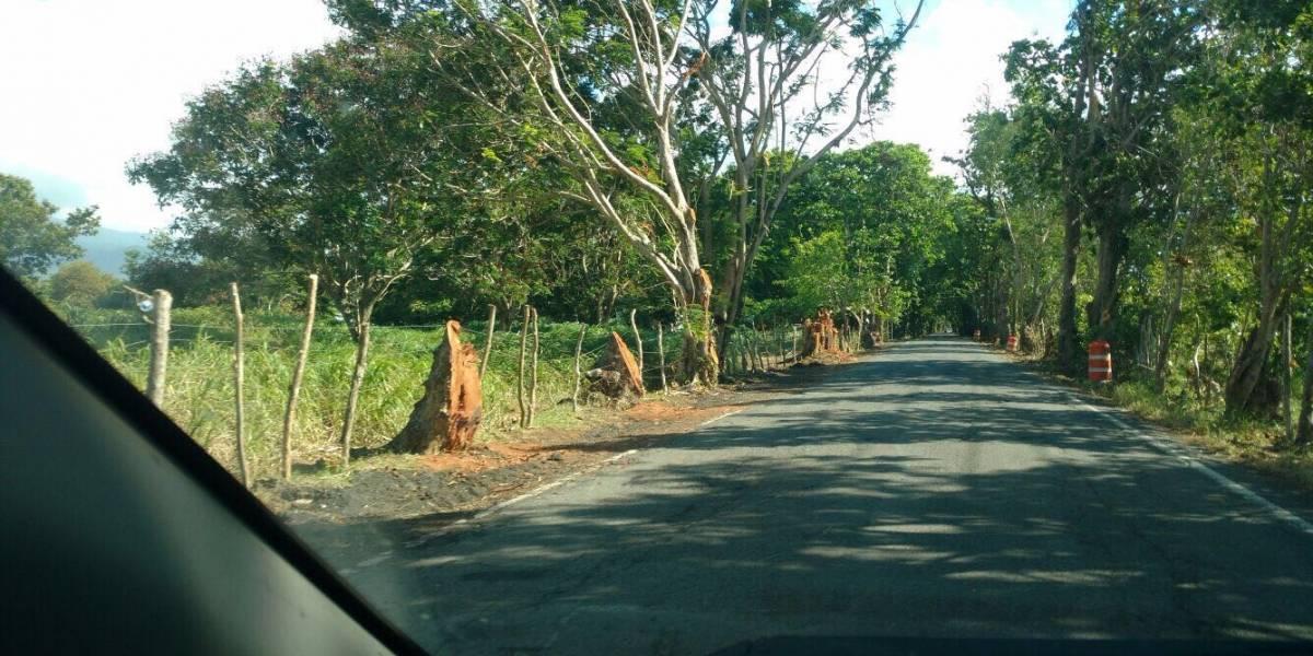 Colegio de Arquitectos hace llamado a detener tala ilegal de árboles