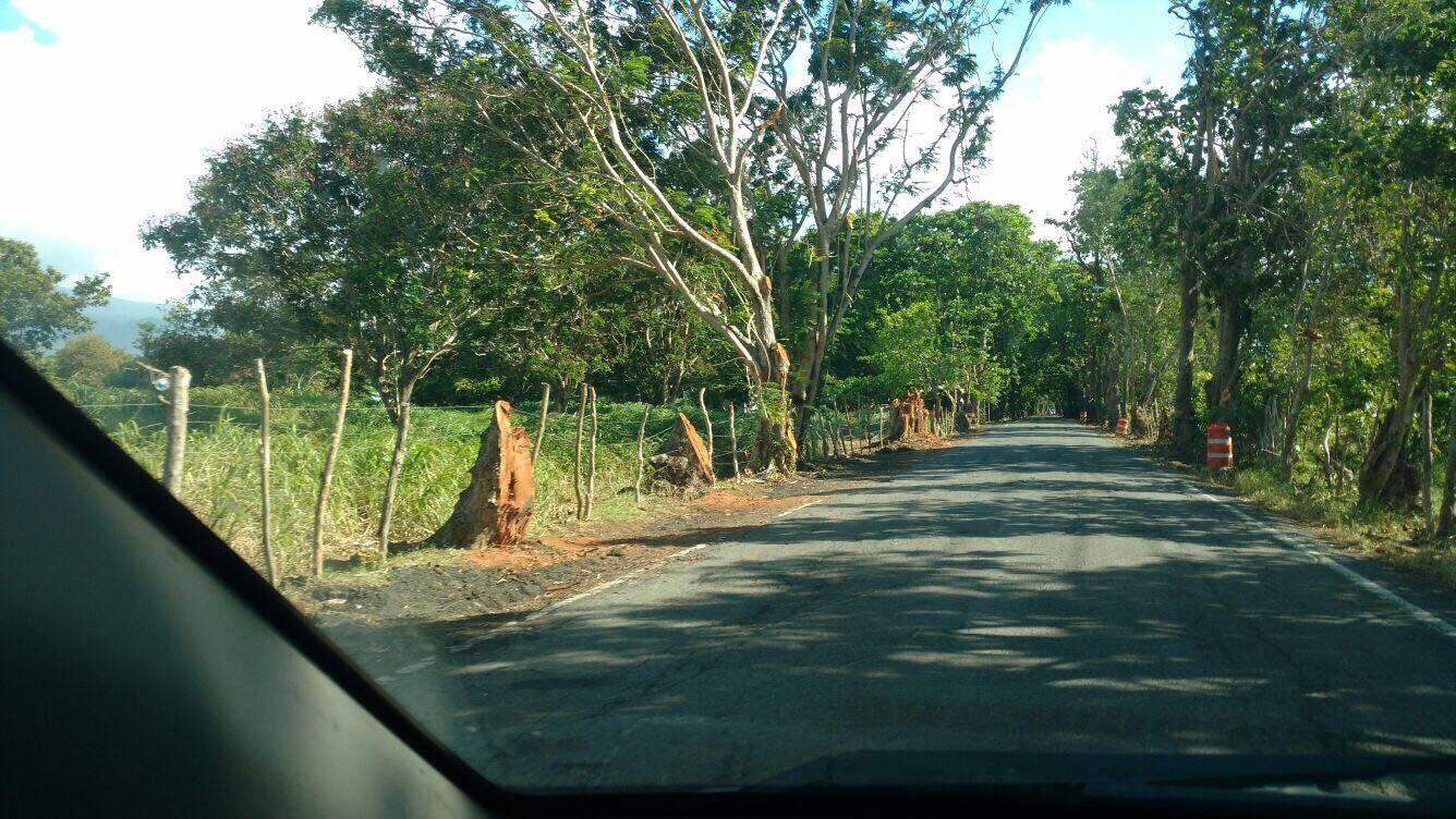 Denuncian masivo corte de árboles entre Loíza y Río Grande. / Suministrada
