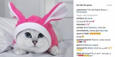 Instagram @cobythecat