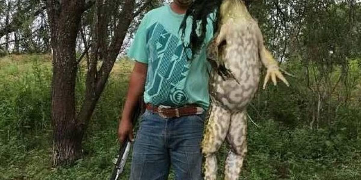 """""""Frogzilla"""": hombre encuentra gigantesca rana y genera polémica en Facebook"""