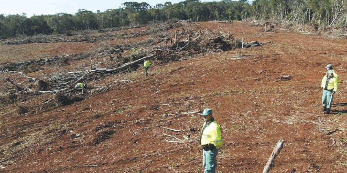Desmatamento tirou 9,7 mil km² de floresta entre agosto de 2018 e julho de 2019