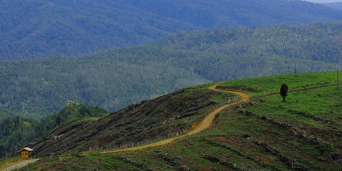 Corte Suprema da luz verde a millonario proyecto forestal de Grupo Angelini