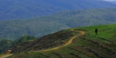 Arauco, filial de Copec, destraba en la justicia millonario proyecto forestal