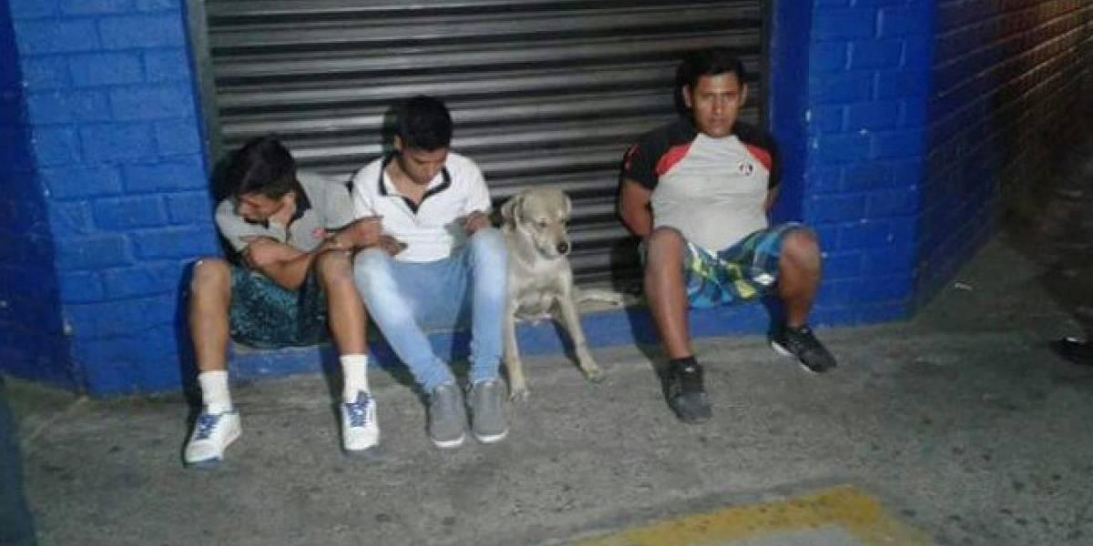 Perro delincuente es detenido junto a su amo y se vuelve viral