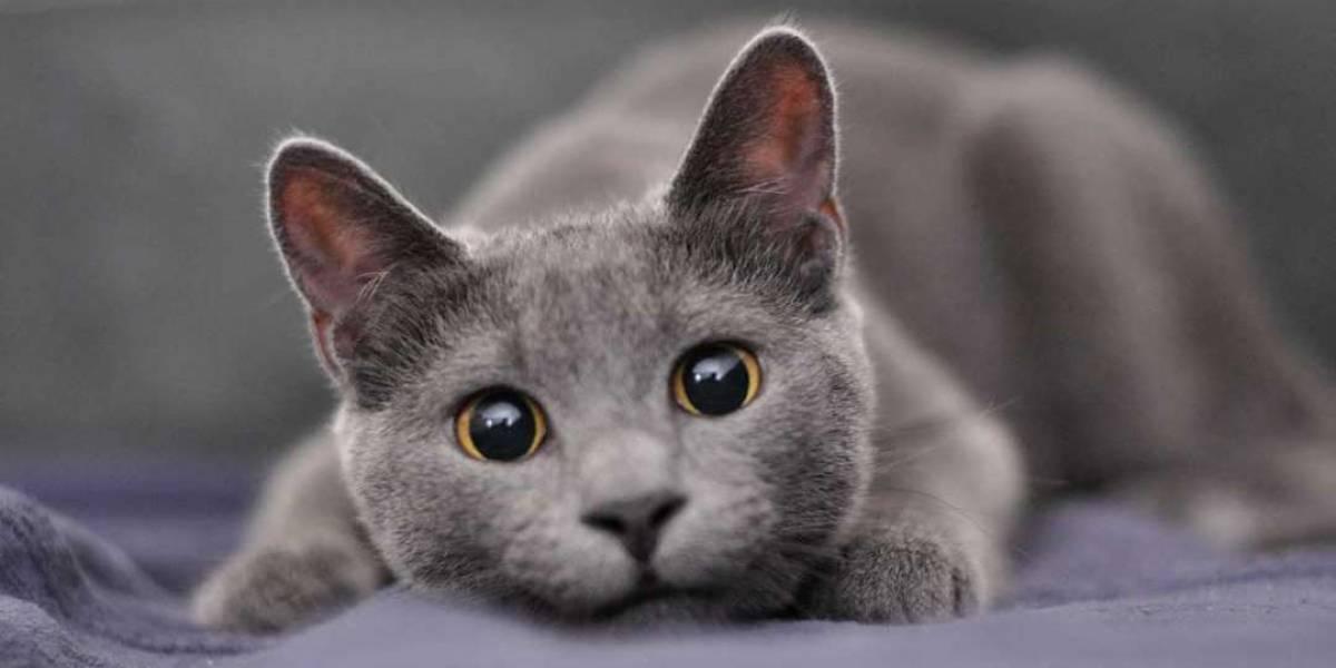 """El trabajo soñado para los """"catlovers"""": clínica veterinaria busca """"abrazadores de gatos"""""""