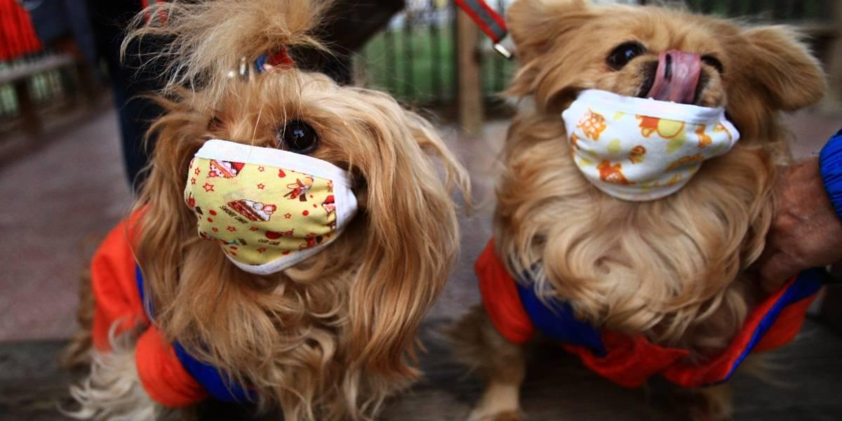 Confirman casos de gripe canina en la Florida