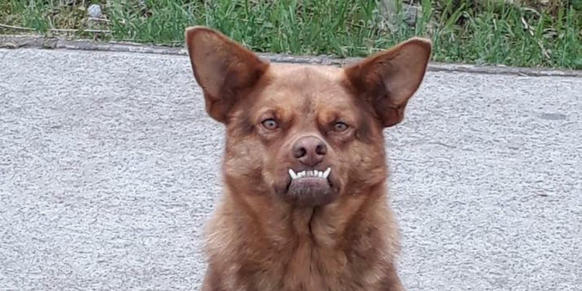 """Este perro mexicano le hace la competencia a """"Chilaquil"""" con su extraño rostro"""