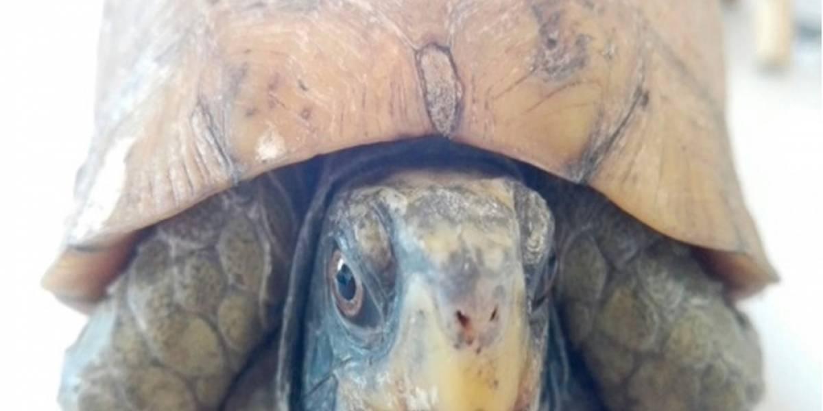 Profepa asegura seis tortugas enviadas por paquetería en Jalisco