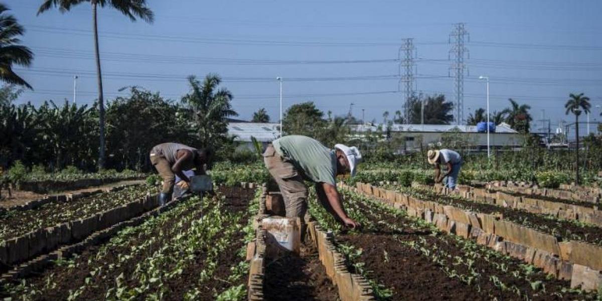 Cuba aprueba reformas que reconocen por primera vez la existencia de empresas privadas