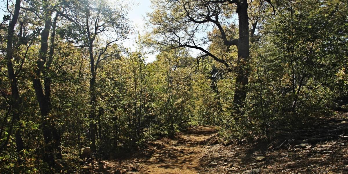 Campaña busca plantar árboles nativos en zonas afectadas por el mega incendio
