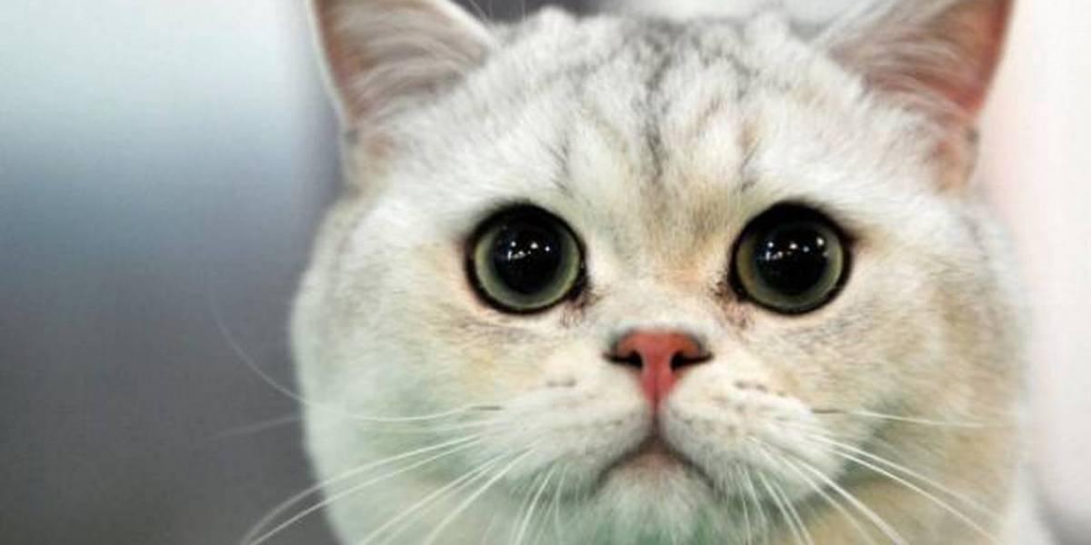 """El increíble caso del """"gato bígamo"""" que llegó a tribunales y que tiene en vilo a toda Italia"""