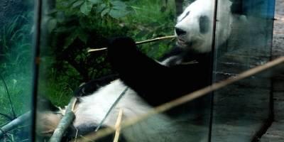 China reconoce a gobierno de capital mexicana por cuidado de pandas