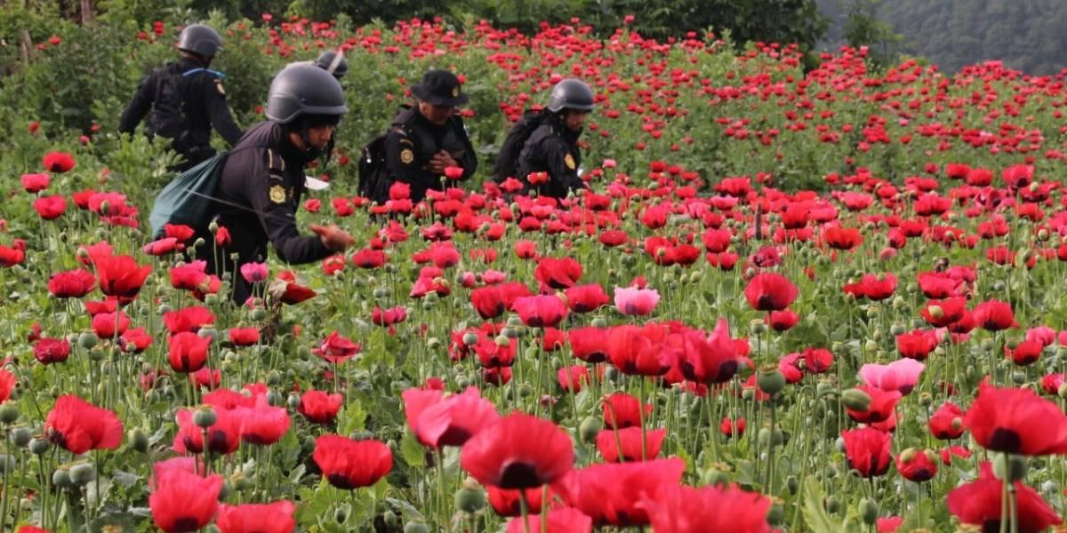 Los últimos días del estado de Sitio donde florece la amapola