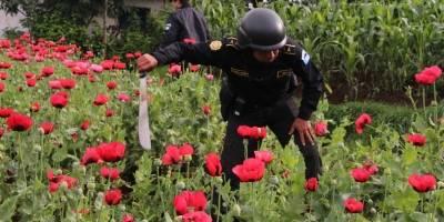 Los últimos días del estado de Sitio en donde florece la amapola