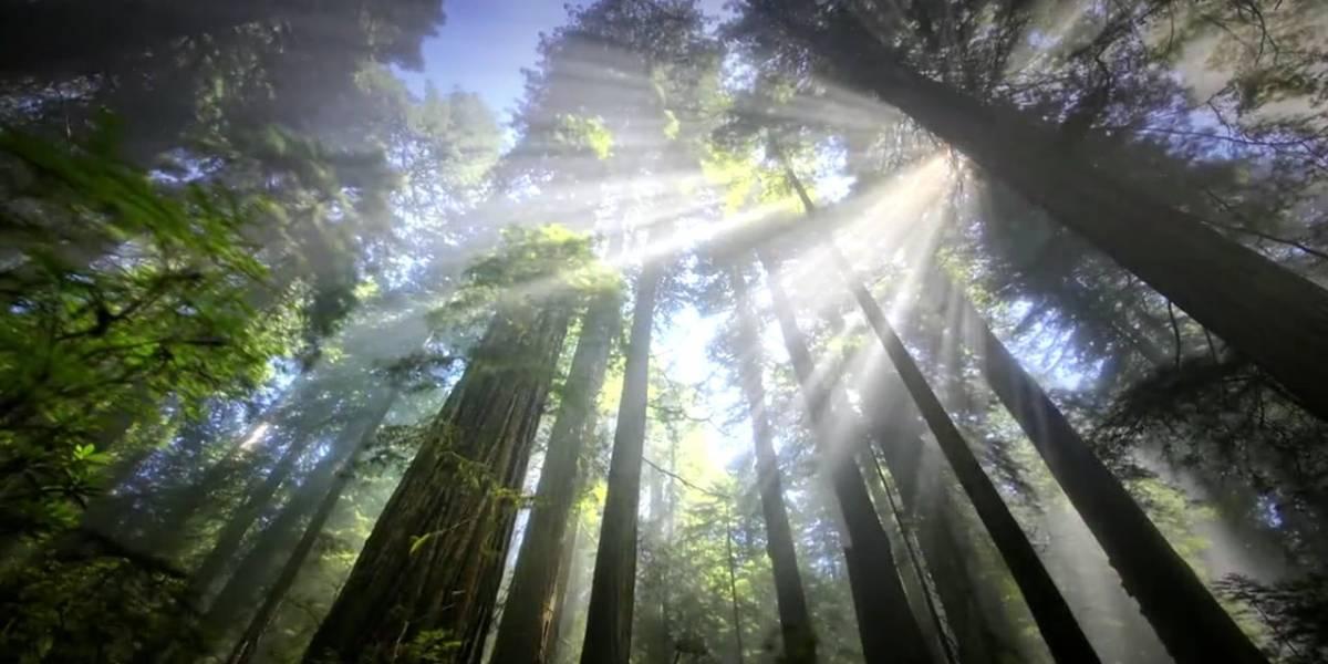 Día Mundial del Medio Ambiente, acciones y no sólo buenas intenciones