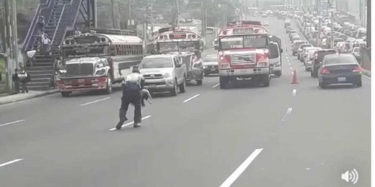 VIDEO. Agente de PMT de Villa Nueva detiene tráfico para salvar a un perro herido y se gana a los usuarios