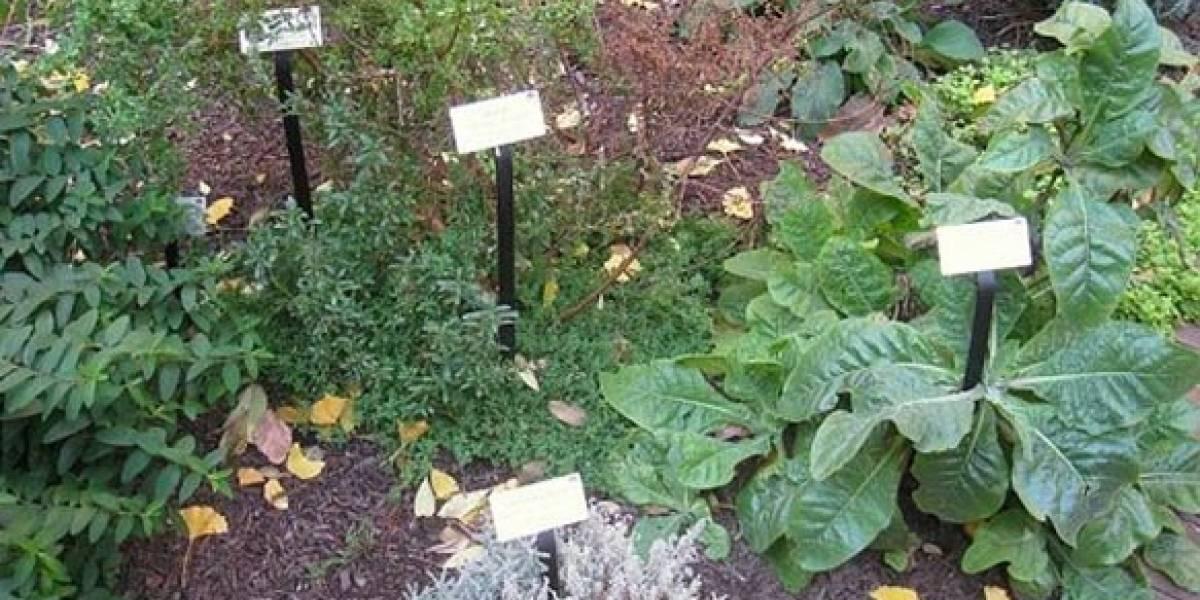 Abre sus puertas jardín medicinal de la UAM en Xochimilco
