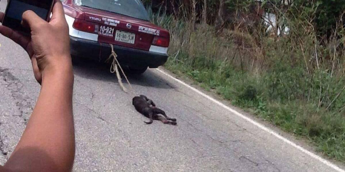Taxista de Oaxaca arrastra con su auto a perro por comerse un pollo