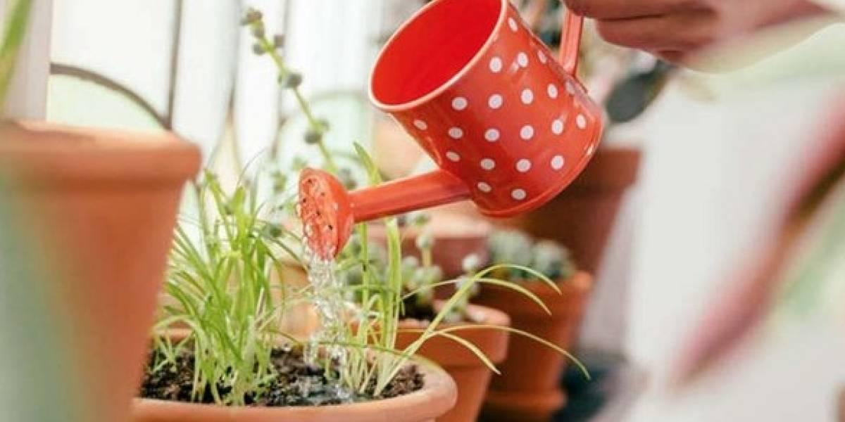Top: Cinco plantas ideales para tener en un apartamento