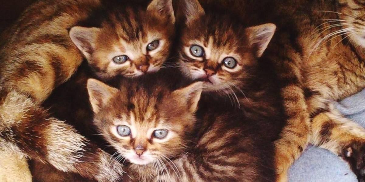 """El """"asesino serial"""" de gatos que tiene paralizado a un pueblo de Francia"""