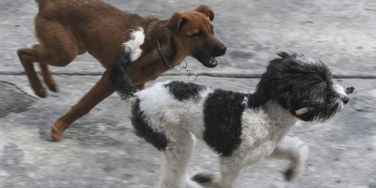Contaminación también afecta a mascotas y plantas