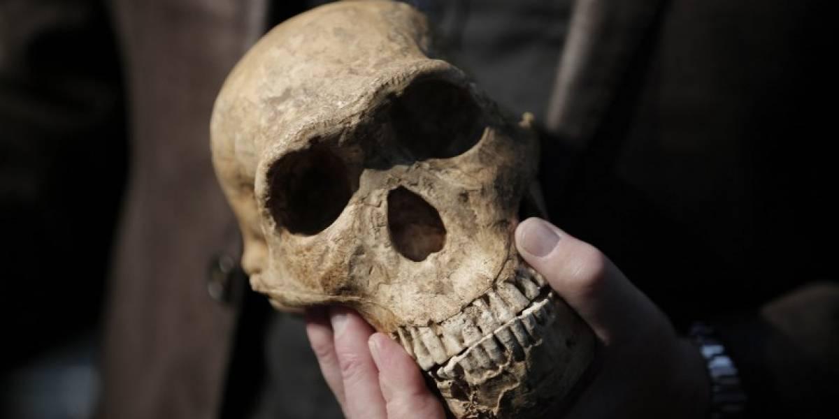 El hallazgo sobre el homo sapiens que modifica todo lo que sabía sobre la historia humana