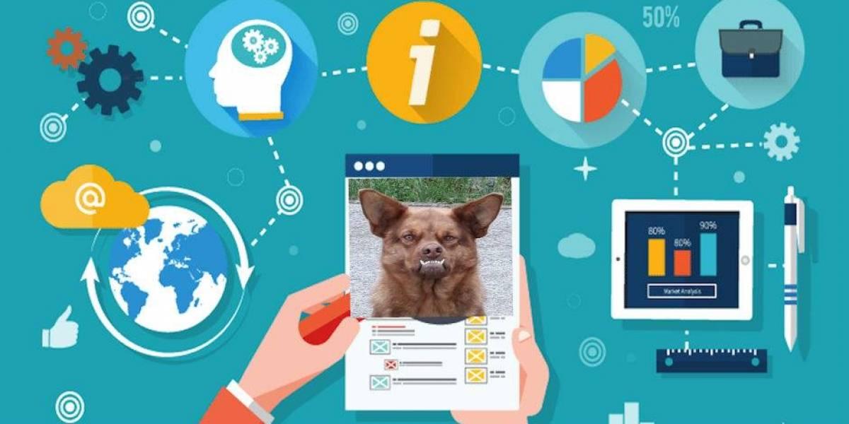 ¿Cómo ser tan famoso en redes sociales como el perro 'chilaquil'?