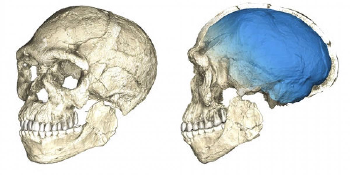 Homo sapiens es más antiguo de lo que se pensaba