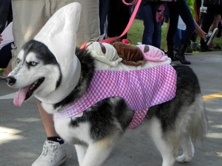 No deje a sus mascotas solas en la calle, hay un hombre en Bogotá que las está robando