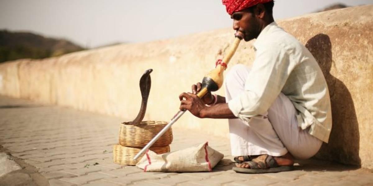 Encantador muere tras ser mordido por su propia serpiente en Marruecos