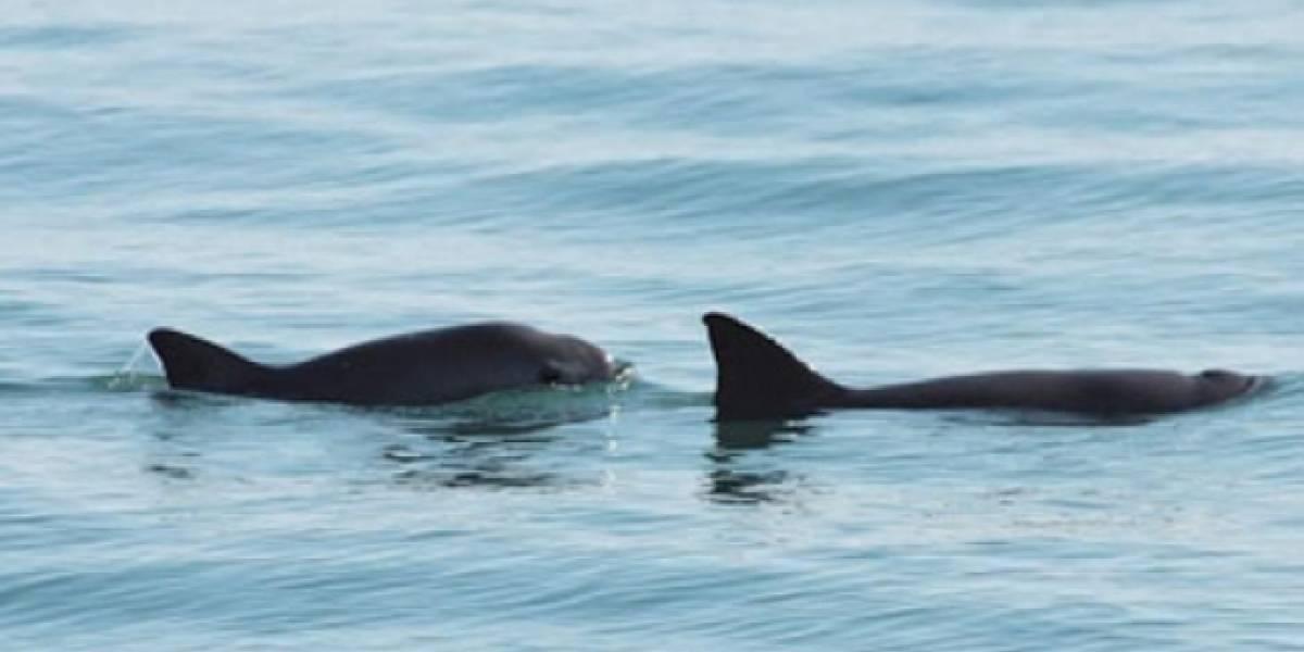 Gobierno de México trabaja para conservar especies marinas en riesgo