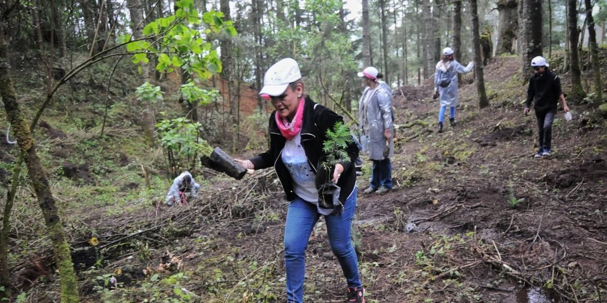Invita Fundación Grupo Modelo a plantar un árbol