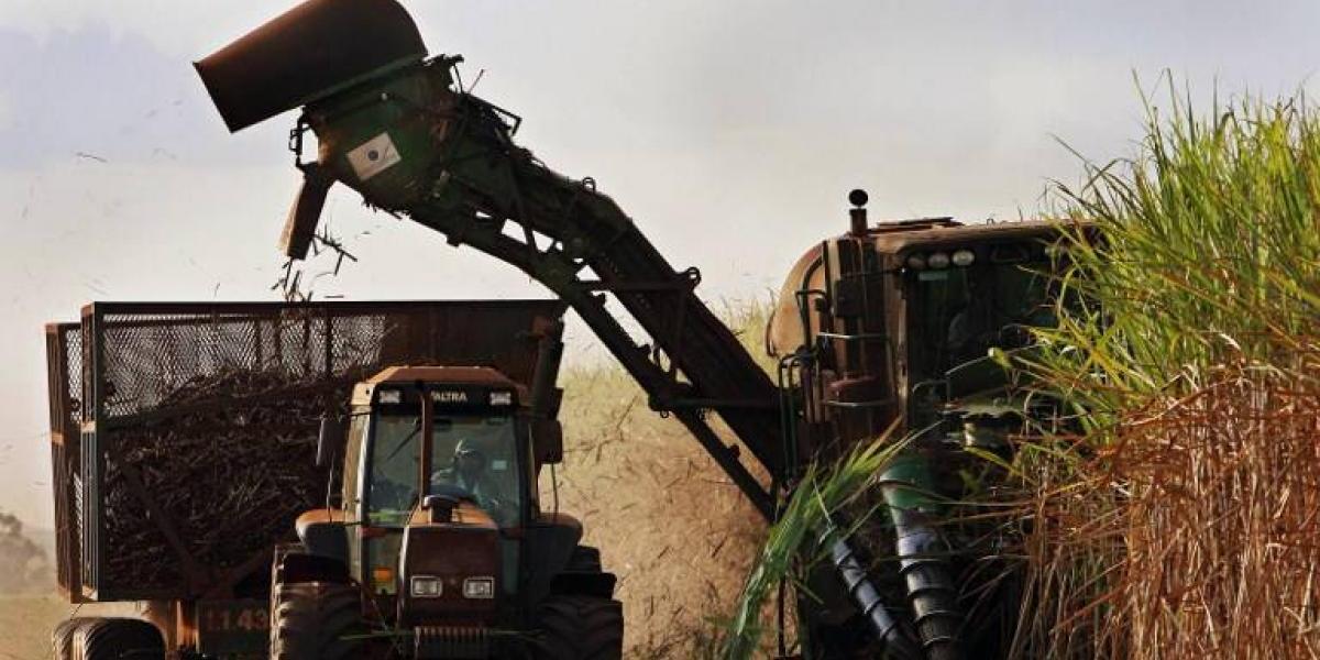 Brasil será pionero mundial en la producción de caña de azúcar transgénica
